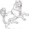colora il cane che salta