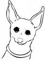 immagine di cane chihuahua
