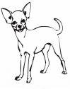 cane chihuahua da colorare