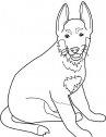 immagine del cane tedesco shepherd