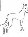 disegno in bianco e nero di un greyhound