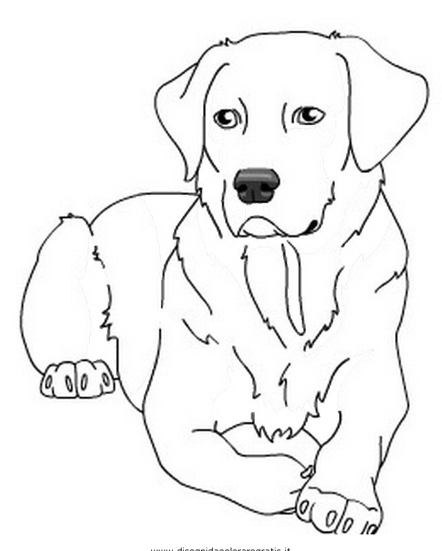 yellow lab coloring pages - cani da colorare disegni gratis