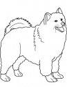 immagine in bianco e nero di cane samoyed