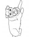 disegno di cane schnauzer