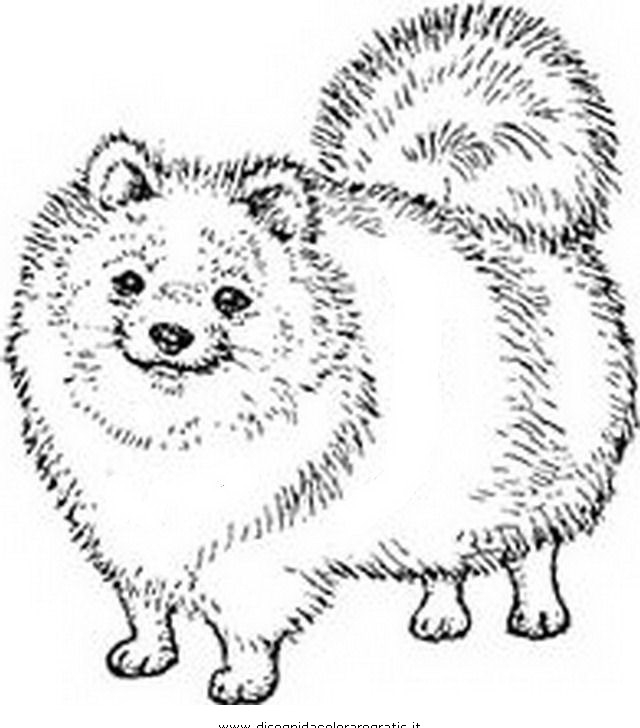 Cani da colorare disegni gratis for Cane disegno da colorare