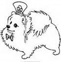 colora il cane volpino