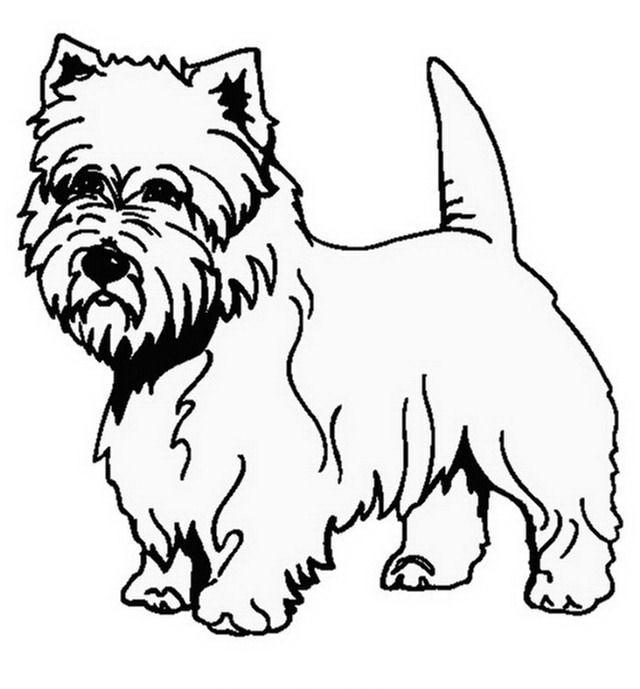 disegni da colorare cani di razza