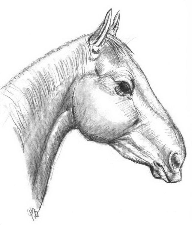 Cavalli da colorare disegni gratis for Immagini di cavalli da disegnare