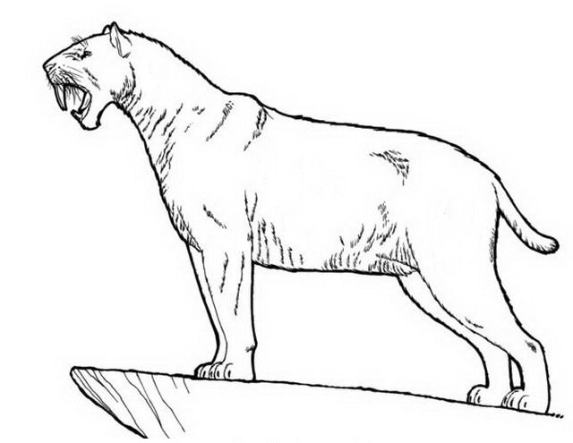 sabertooth cat coloring pages - photo#6