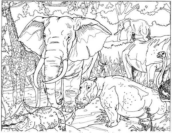 Elefante da colorare disegni gratis for Immagini di animali marini da stampare