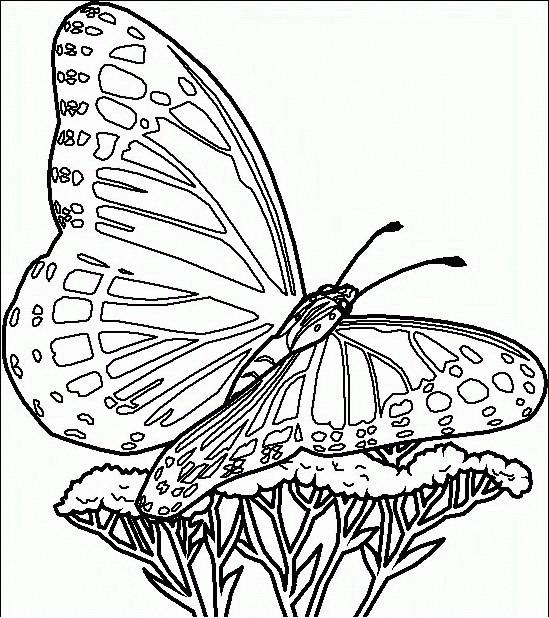 Farfalle da colorare disegni gratis for Disegni da stampare e colorare fiori