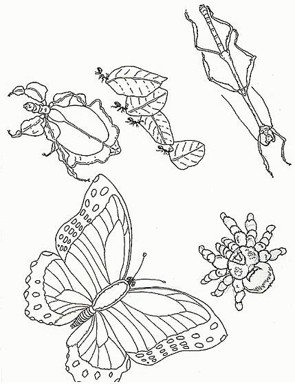 Farfalle da colorare disegni gratis - Coloriage insecte ...