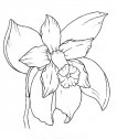 Disegno di orchidea