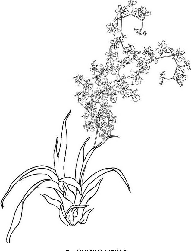 Fiori da colorare disegni gratis - Immagini da colorare di rose ...
