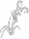 immagine dii ramo di orchidea