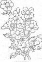 disegno di fascio di primula