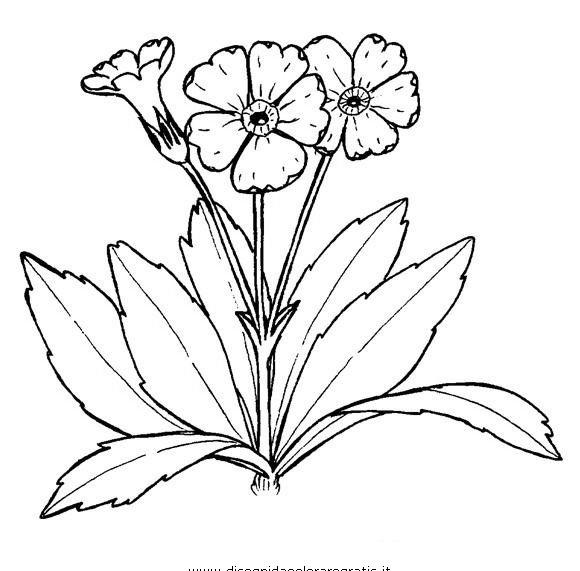 Fiori da colorare disegni gratis for Primule da colorare