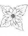 stella di natale in bianco e nero