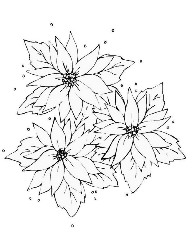 Fiori da colorare disegni gratis for Immagini di fiori facili da disegnare