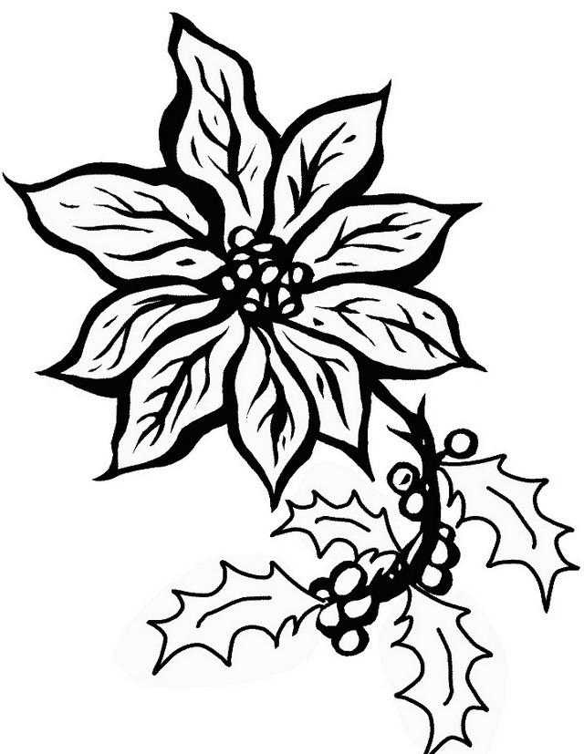 Disegno Stella Di Natale Da Colorare.Fiori Da Colorare Disegni Gratis
