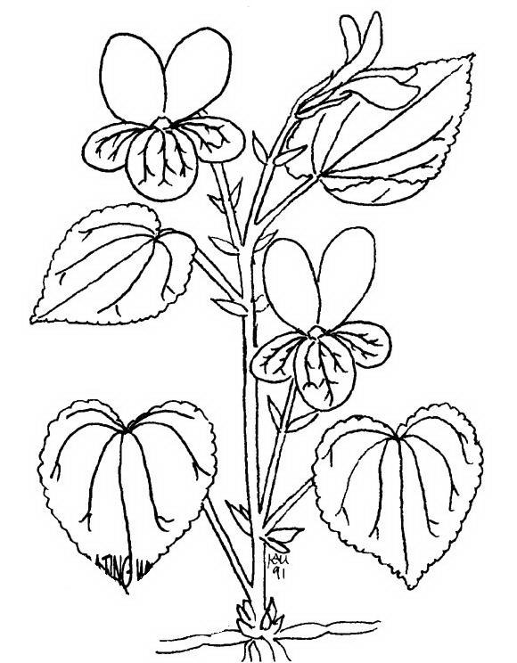 Fiori da colorare disegni gratis for Colorare le rose