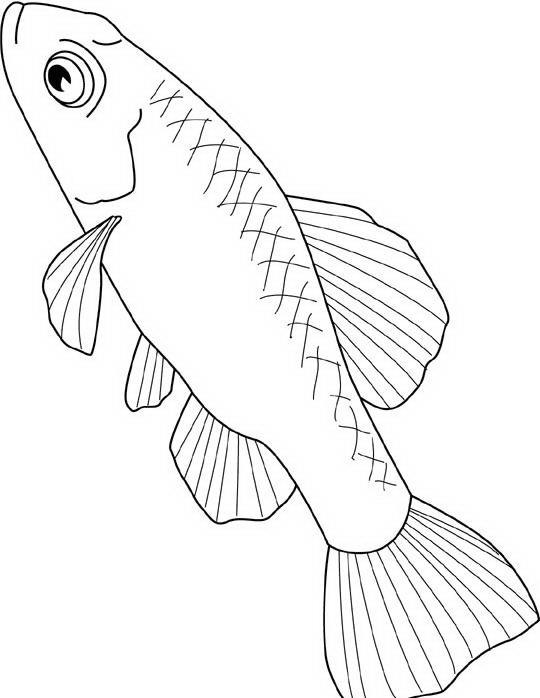 Pesci da colorare disegni gratis for Immagini di pesci da disegnare