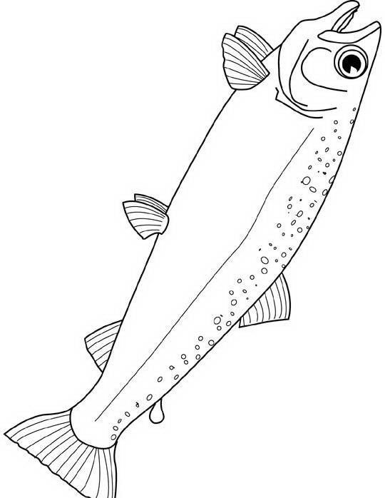 Pesci da colorare disegni gratis for Disegni pesciolini da colorare