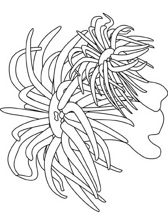 pesci da colorare disegni gratis On foto di pesci da stampare