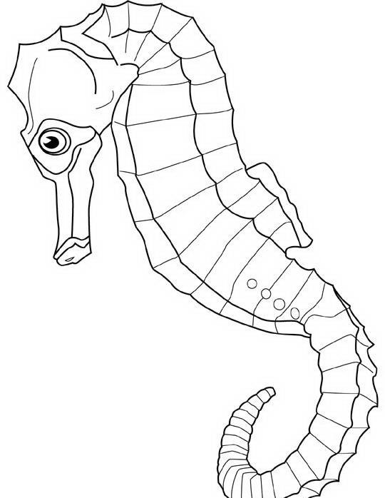 Pesci da colorare disegni gratis for Disegni di pesci da colorare e stampare gratis