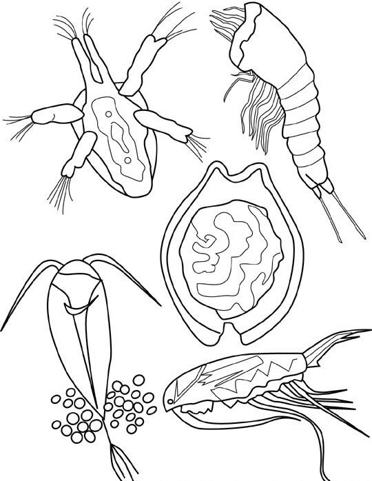 Pesci da colorare disegni gratis for Pesci da stampare e colorare