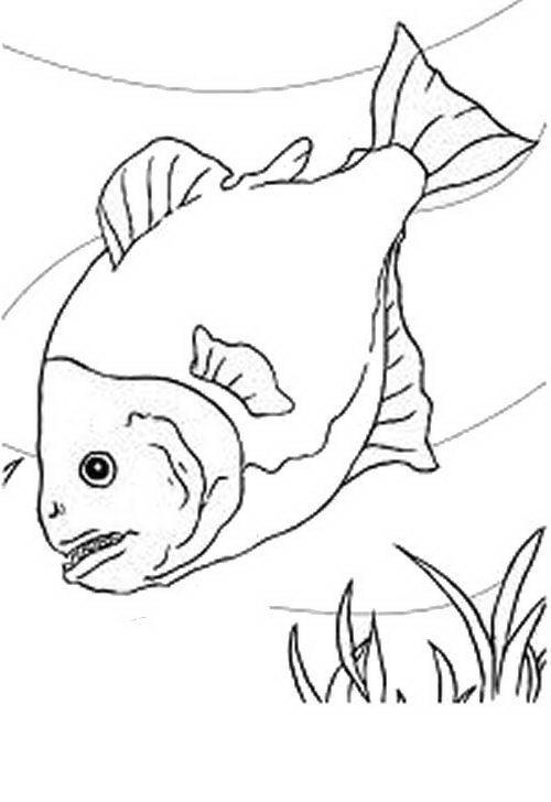 Pesci da colorare disegni gratis for Pesciolini da colorare per bambini