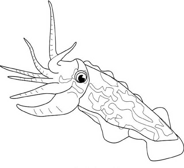 Pesci da colorare disegni gratis for Disegni di pesci da stampare e colorare