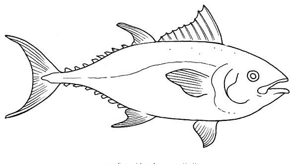 Pesci da colorare disegni gratis for Disegni di pesci da colorare e stampare