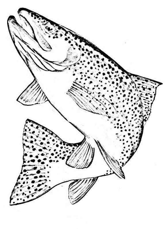 Pesci da colorare disegni gratis for Trota da colorare
