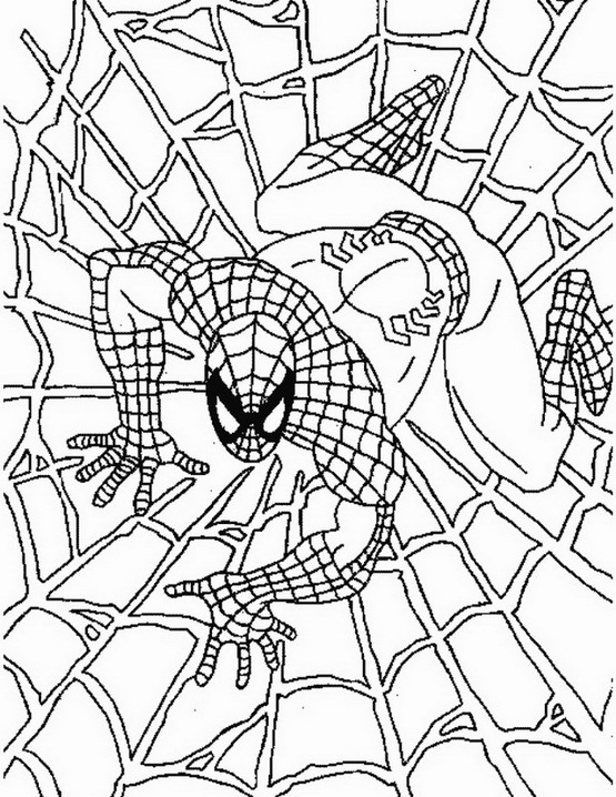Spiderman da colorare disegni gratis - Immagini da colorare dell uomo ragno ...