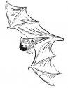Immagine di vampiro pipistrello