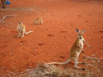Australia Wikipedia