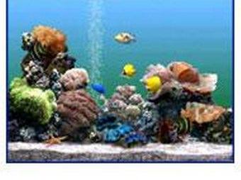 Sfondi nokia 5300 gratis for Sfondi animati pesci
