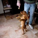 Cane che balla video