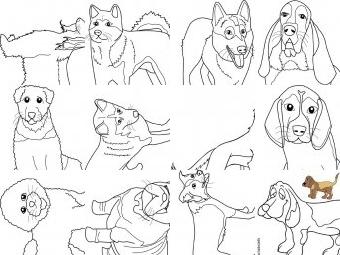 Cani da colorare disegni