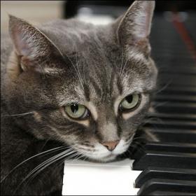 Gatto al pianoforte video
