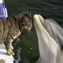 Gatto e delfino