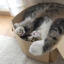 Gatto nella scatola video