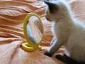 Il gatto e lo specchio